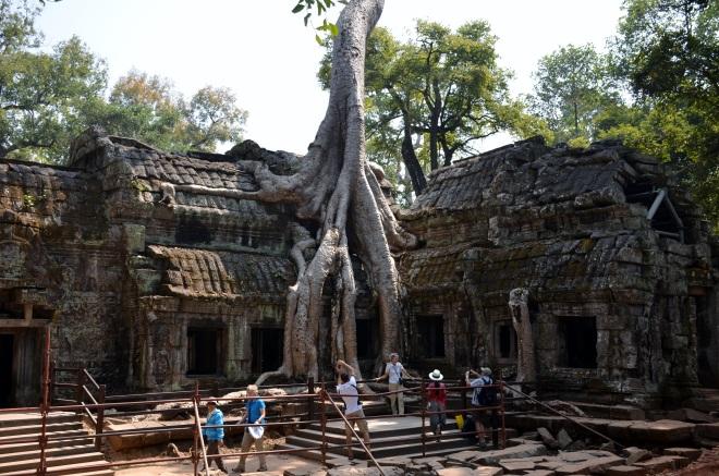 arbre1