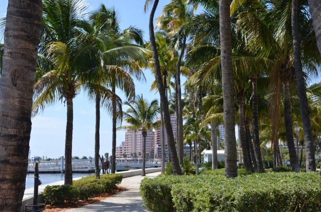 palmtreewpb