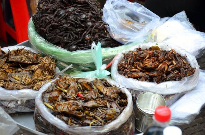 insecte market