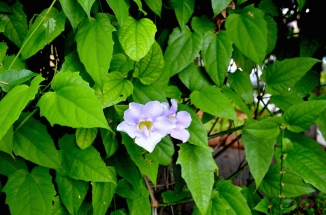 violettefar